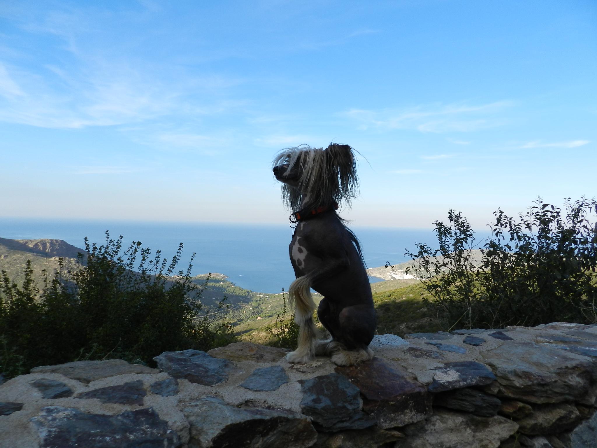 Наш пёс-путешественник