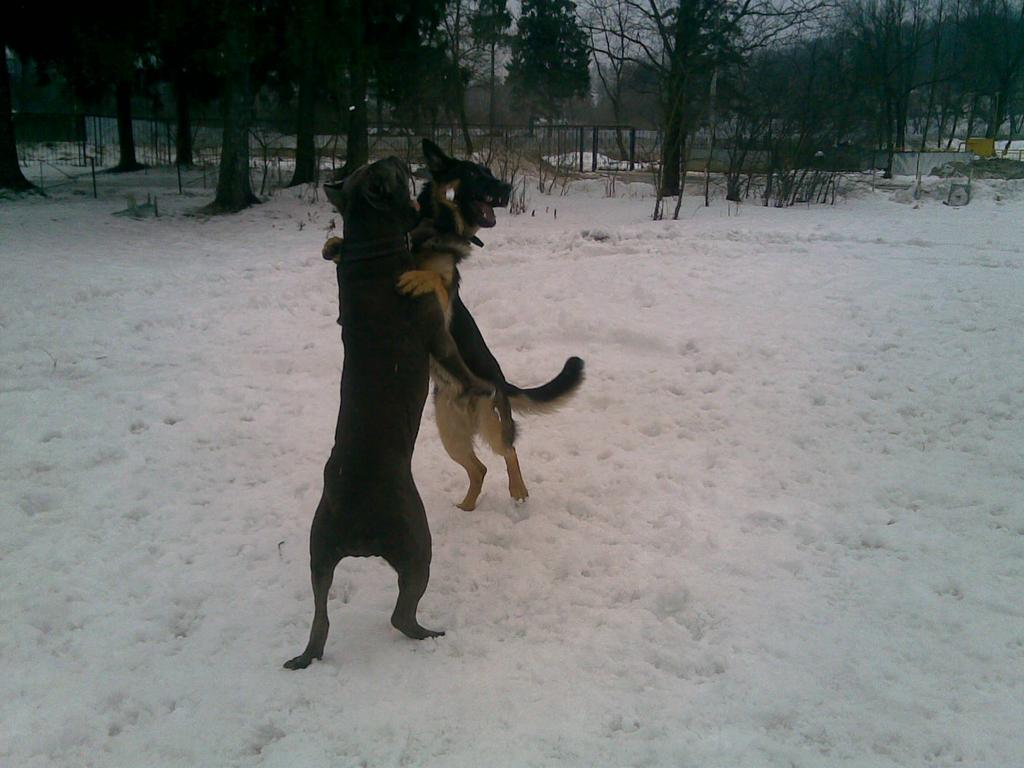 Фаня+Миша=Дружба